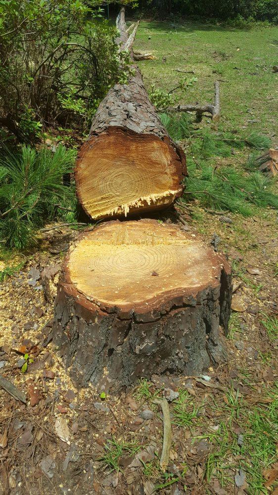 Lisa's Tree Service: Blackshear, GA
