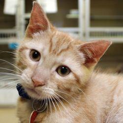Bucks County SPCA - Animal Shelters - 1665 Street Rd, New