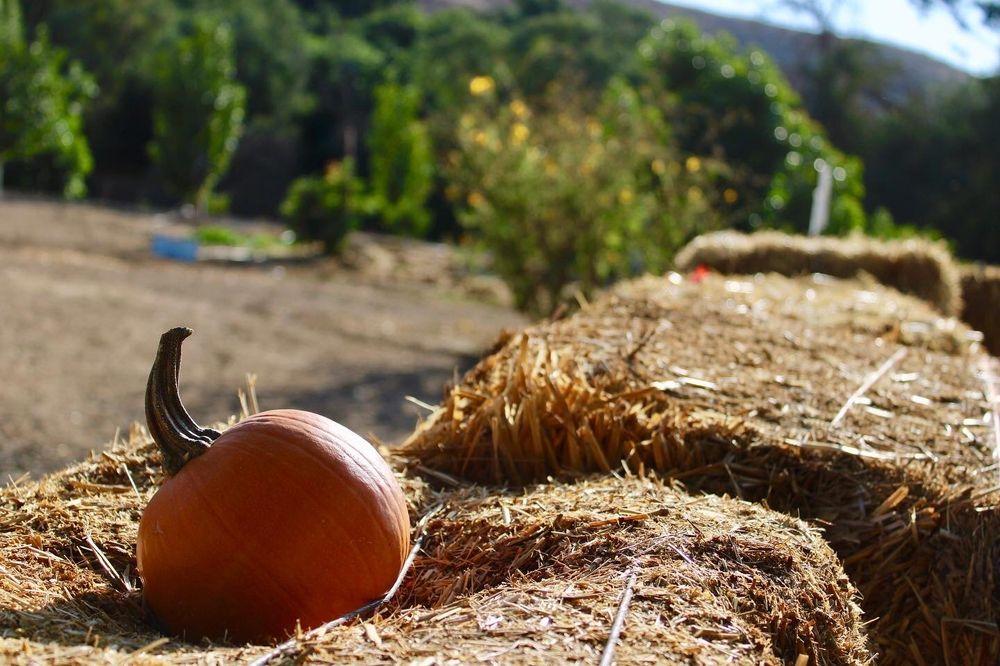 Greenspot Farm: 10133 Ward Way, Mentone, CA