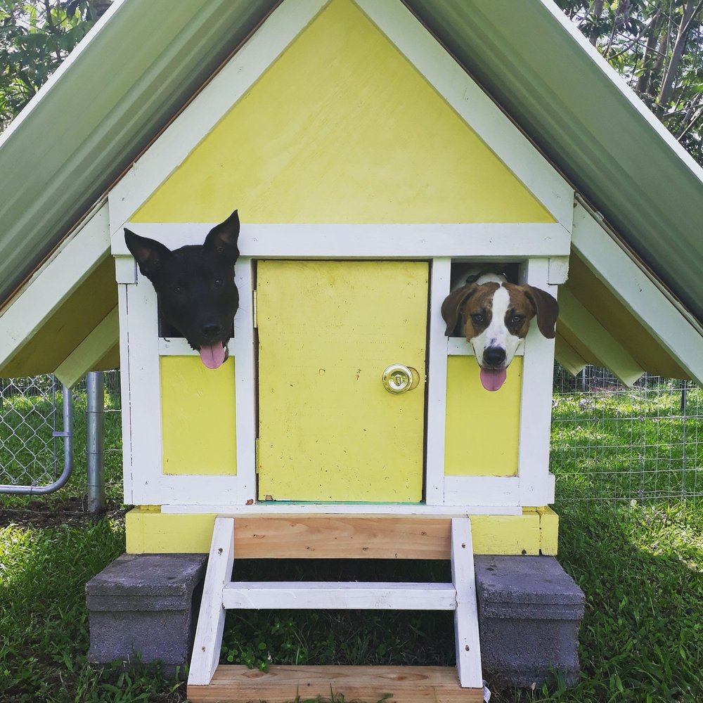 Pau Hana Pet Resort: 15-1588 25th Ave, Keaau, HI