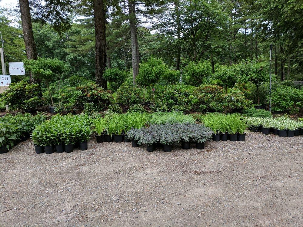 Stonefalls Gardens: 184 Stonefalls Rd, Henniker, NH