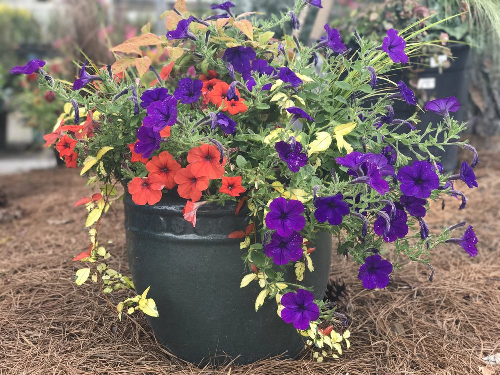 Exceptional Photo Of Woodleyu0027s Garden Center   Columbia, SC, United States
