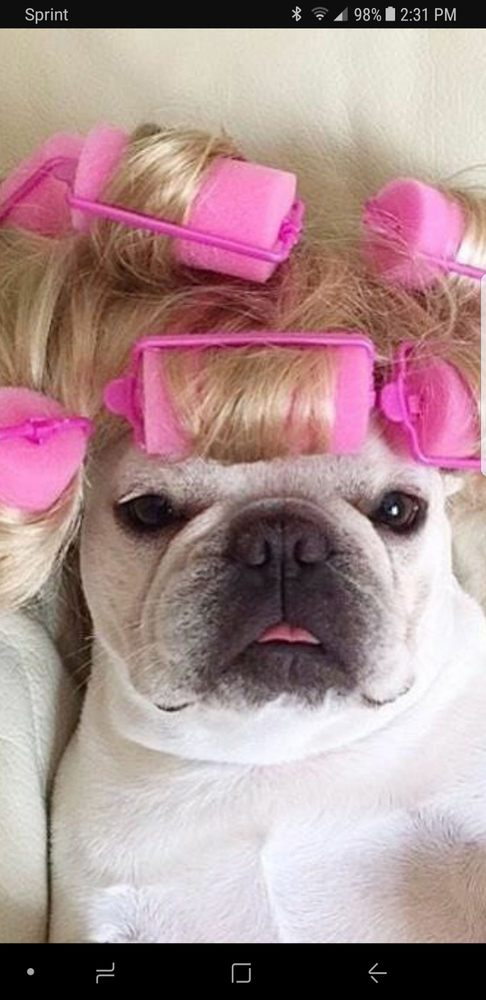 BLONDIES MOBILE PET GROOMING: 7766 Manor Forest Ln, Boynton Beach, FL