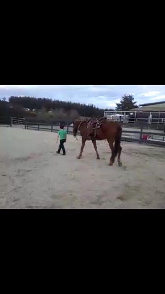 Gaited Pleasure Horses: Royal Oaks, CA