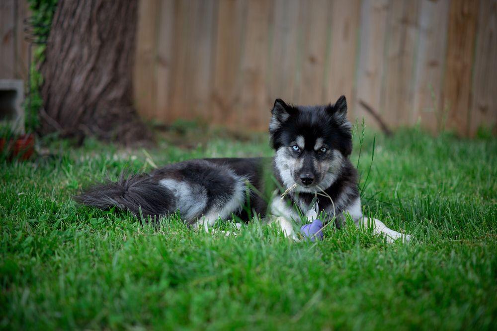 Midwood Barkery 72 Photos Amp 10 Reviews Pet Sitting