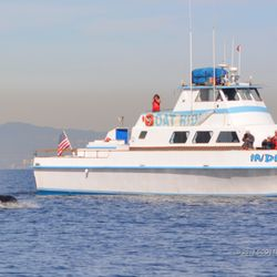 Photo Of Redondo Beach Sportfishing Whale Watch Ca United States