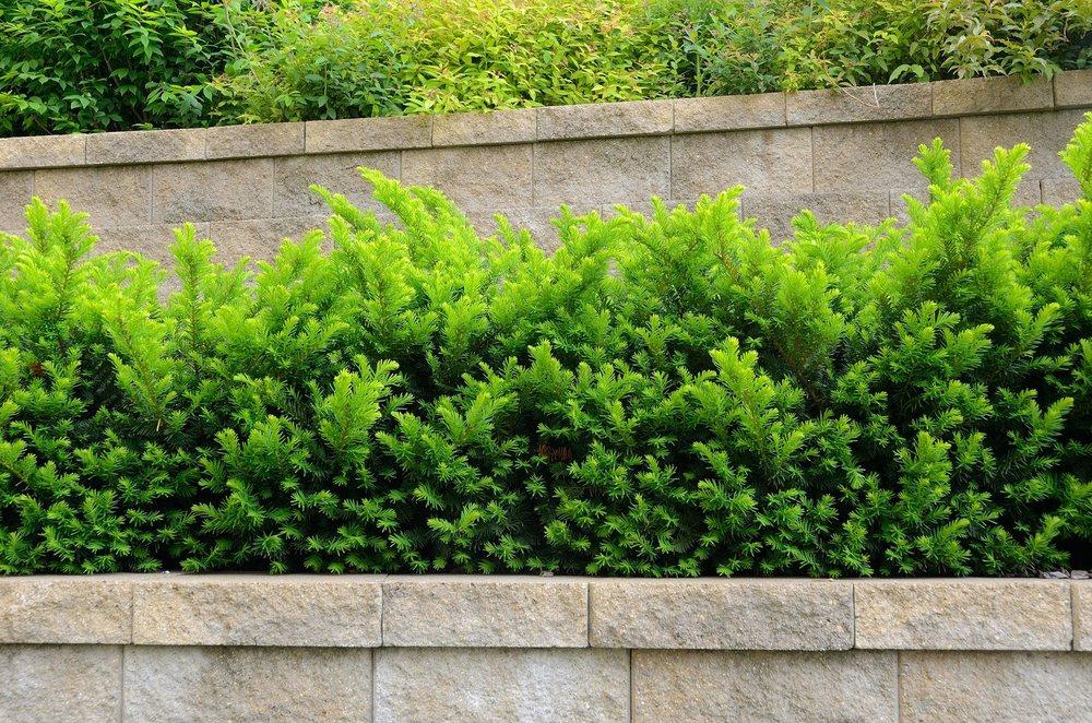 Mathias Precision Tree & Landscaping: 223 Salt Lick Rd, St. Peters, MO
