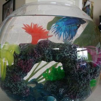 Photo Of Trop Aquarium Las Vegas Nv United States Shiny Blue