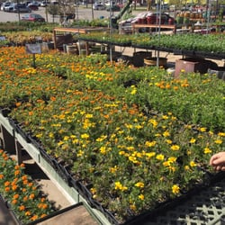 Photo Of Plantus Nursery Fort Worth Tx United States