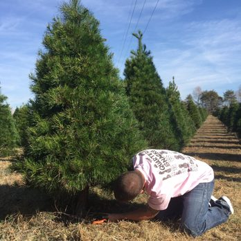 Photo of Penland S L Christmas Tree Farm - York, SC, United States. Found - Penland S L Christmas Tree Farm - 22 Photos & 10 Reviews - Christmas