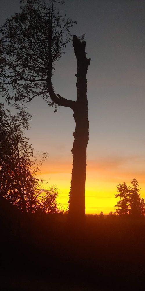 Lincoln Logging Tree Care: 19515 212th St E, Orting, WA
