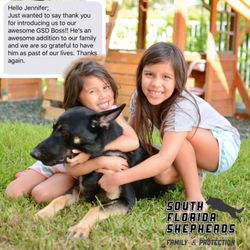 South Florida German Shepherds - 2019 All You Need to Know