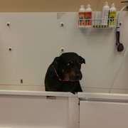 Pet pantry dog wash 11 photos 18 reviews pet stores 5055 n photo of pet pantry dog wash colorado springs co united states solutioingenieria Images