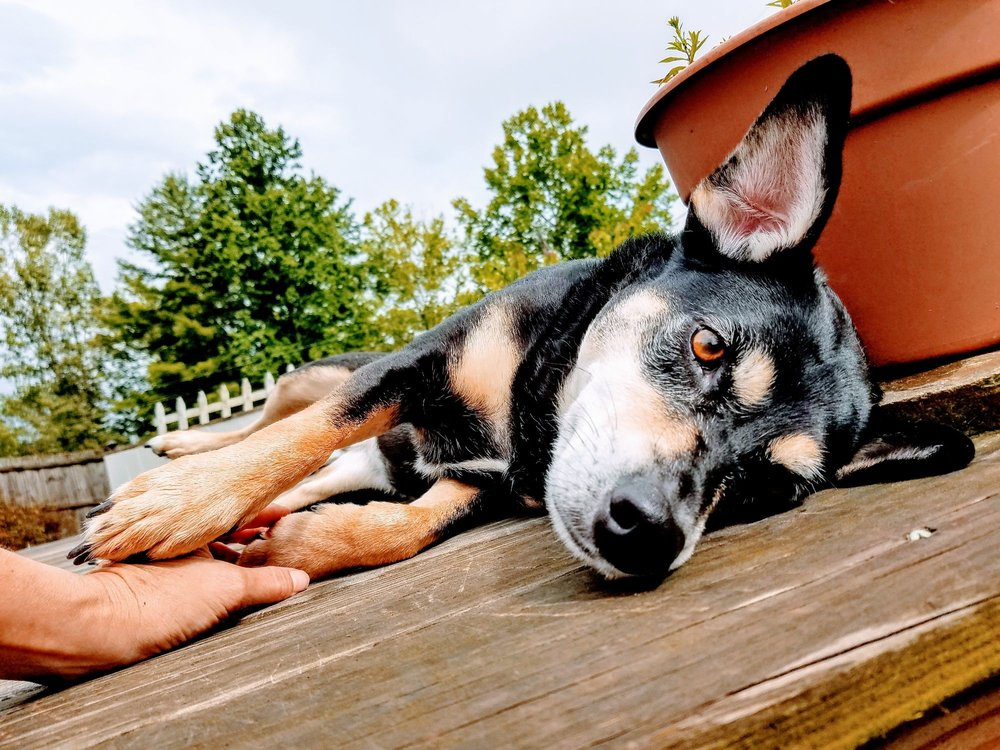 Mindful Pet Sitting: Hendersonville, NC