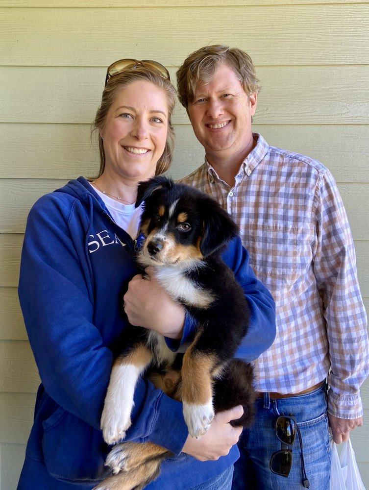 Rainbow Australian Shepherds: Clermont, GA