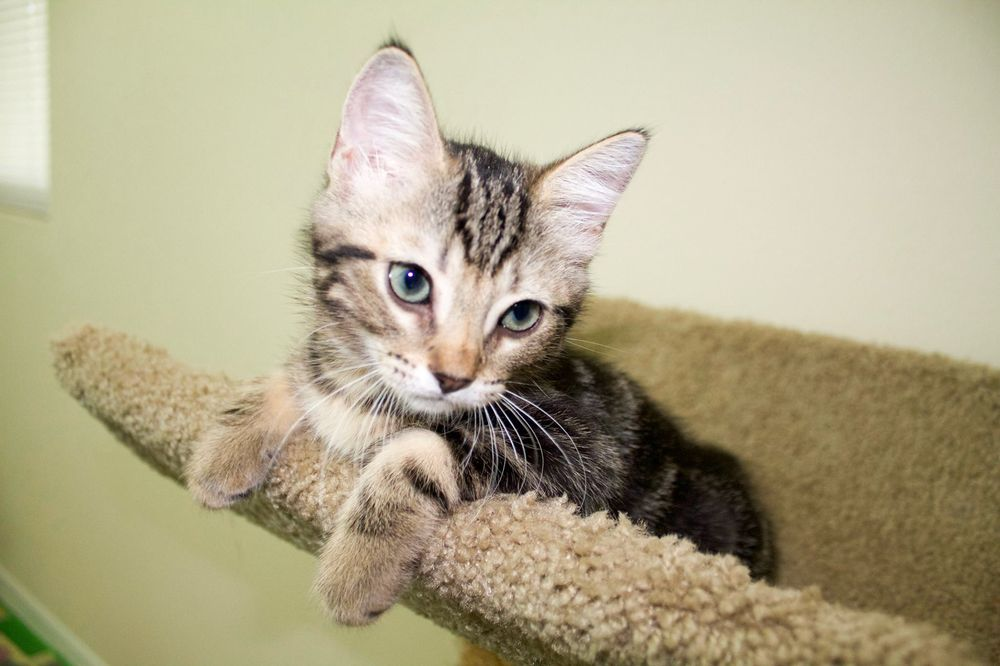 Shiney Day Specialized Pet Care: Sarasota, FL