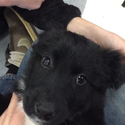 Sylvia's Pets - Pet Stores - 226 University Blvd, Harrisonburg, VA