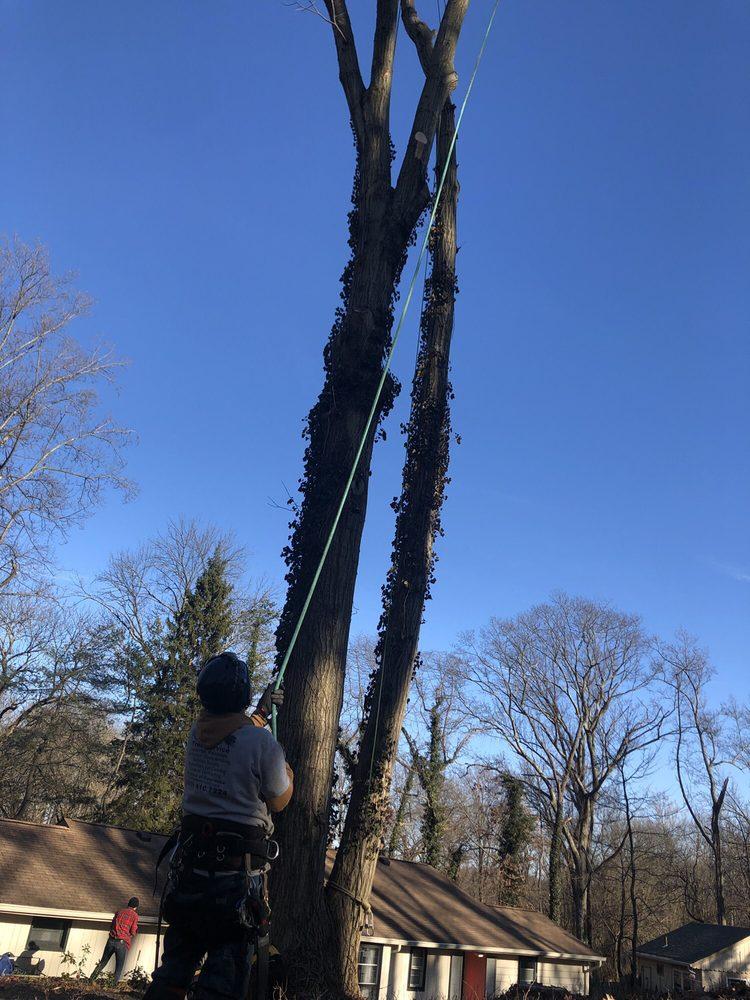 Ralph's Tree Service