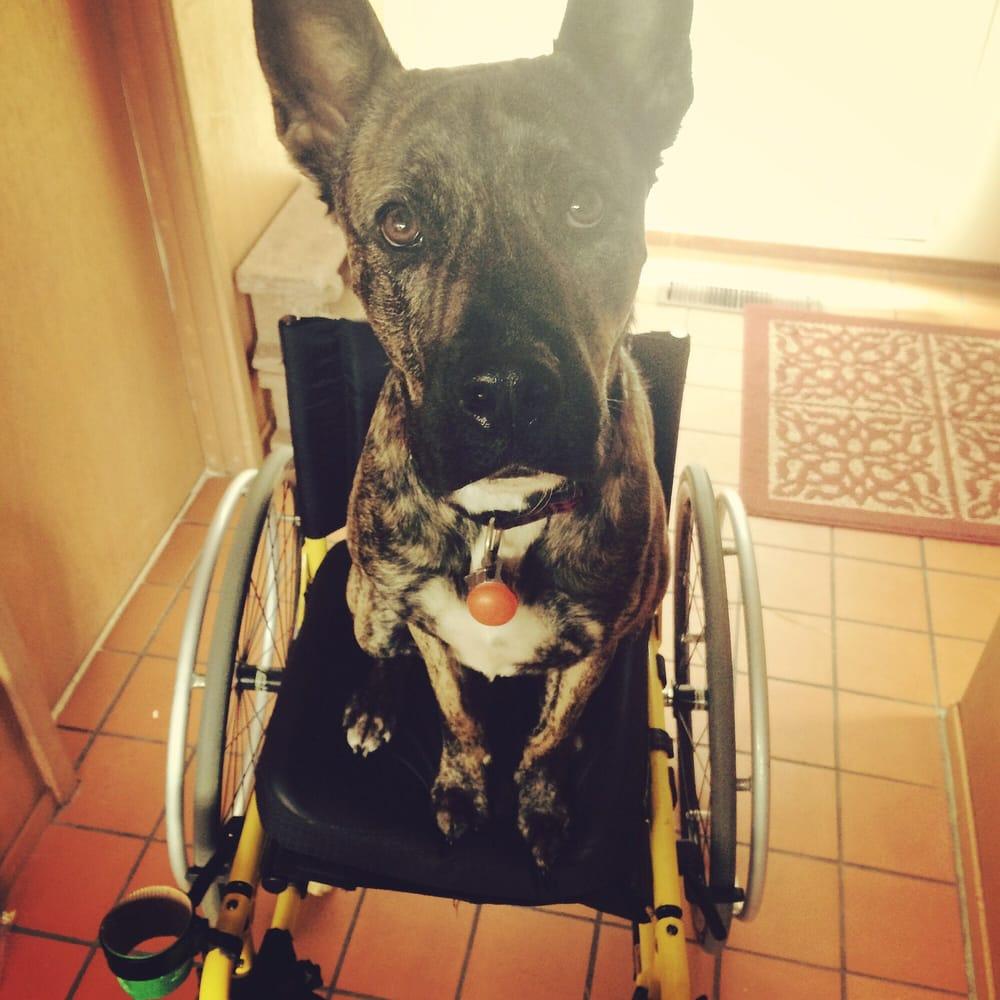 Sebastopol Dog Training