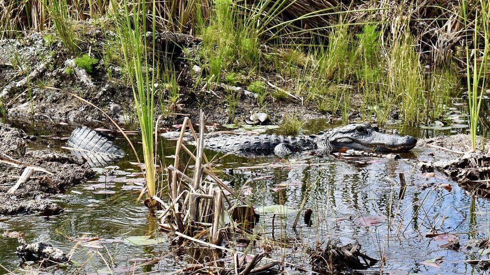 Everglades Swamp Tours: 3500 Everglades Pkwy, Fort Lauderdale, FL
