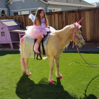 Tickle Me Pony Parties and Traveling Petting Zoo 15 Photos 49