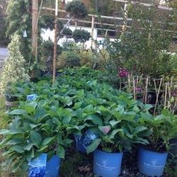 A N T Nursery 12 Photos Nurseries Gardening 1439