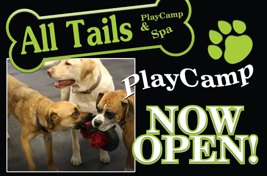 All tails r waggin 51 photos pet boarding pet for Dog boarding places near me