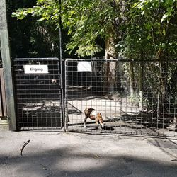 Tierpark Bretten Corona