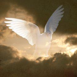 charlotte white dove release funeral services cemeteries 2236