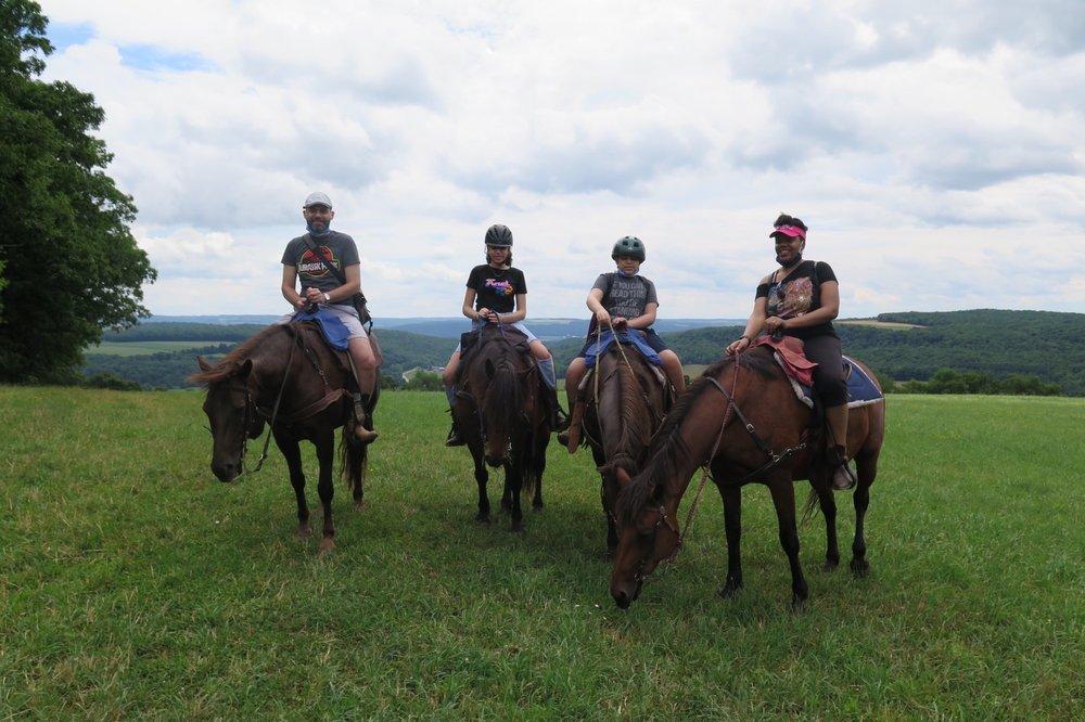 Photo of Overland Morgan Horse Farm: Dansville, NY