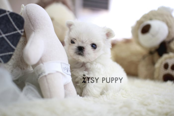 Itsy Puppy: Danville, CA