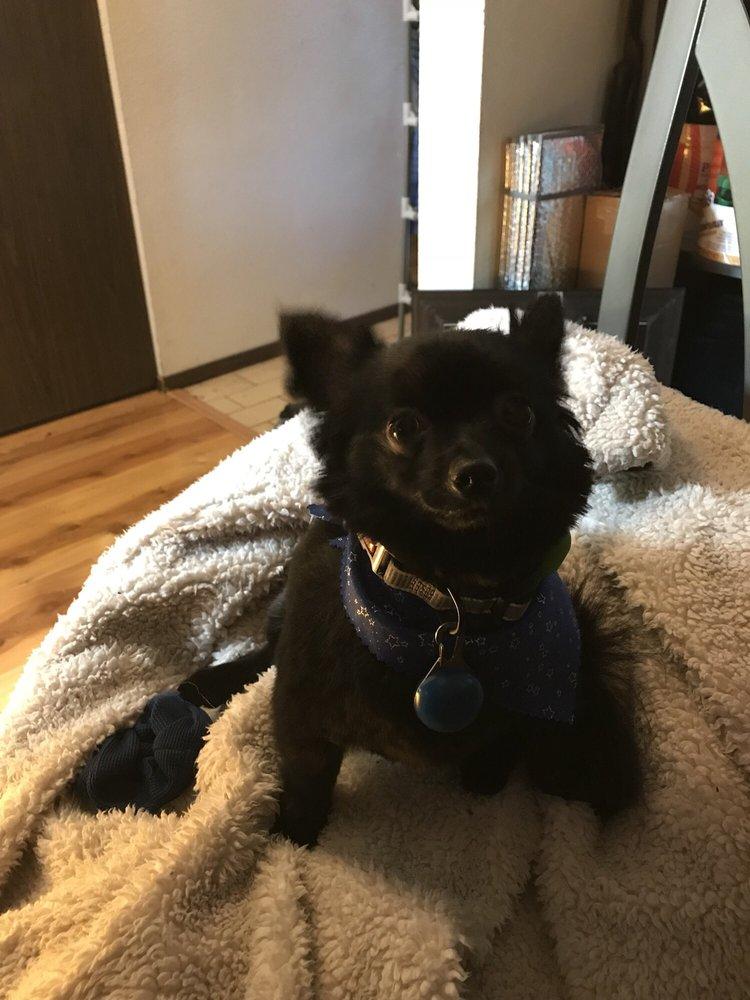 Kay's Mobile Pet Grooming: 8611 Steilacoom Blvd SW, Lakewood, WA