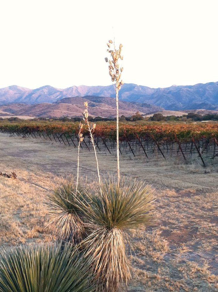Willcox Wine Country: 157 N Railroad Ave, Willcox, AZ