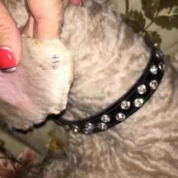 Dog Nicked Ear
