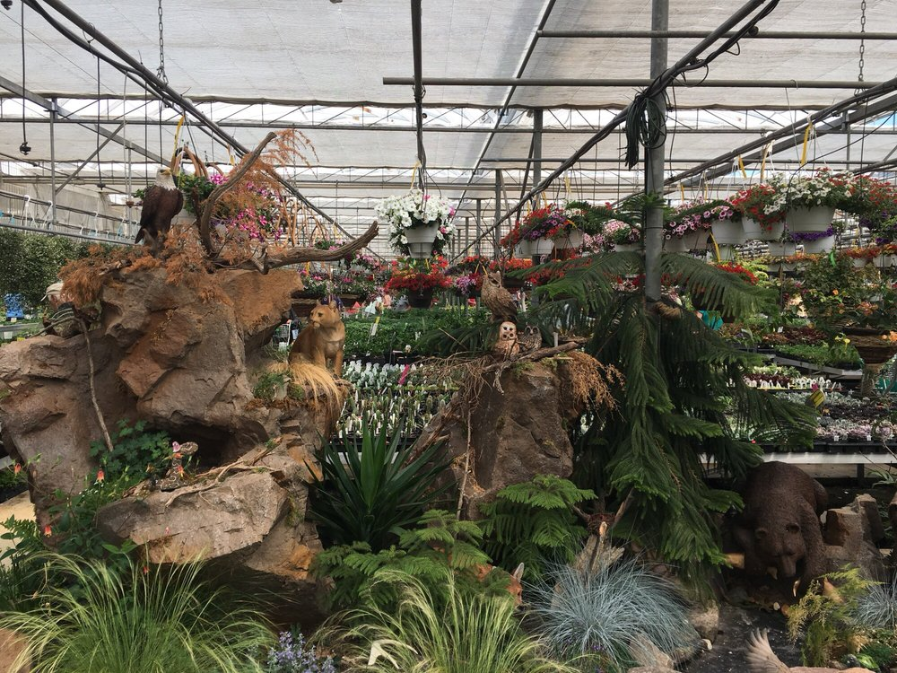 Black Creek Greenhouses: 211 E Black Creek Rd, Terre Hill, PA