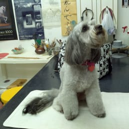 Pets Are People Too In-Home Dog Grooming - Pet Groomers - 919 ...