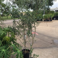Houston garden centers 18 photos landscaping 3600 e sam houston pkwy s pasadena tx Houston garden centers houston tx