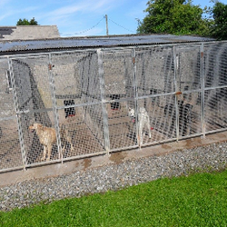 belview kennels pet sitting carstown drogheda co louth