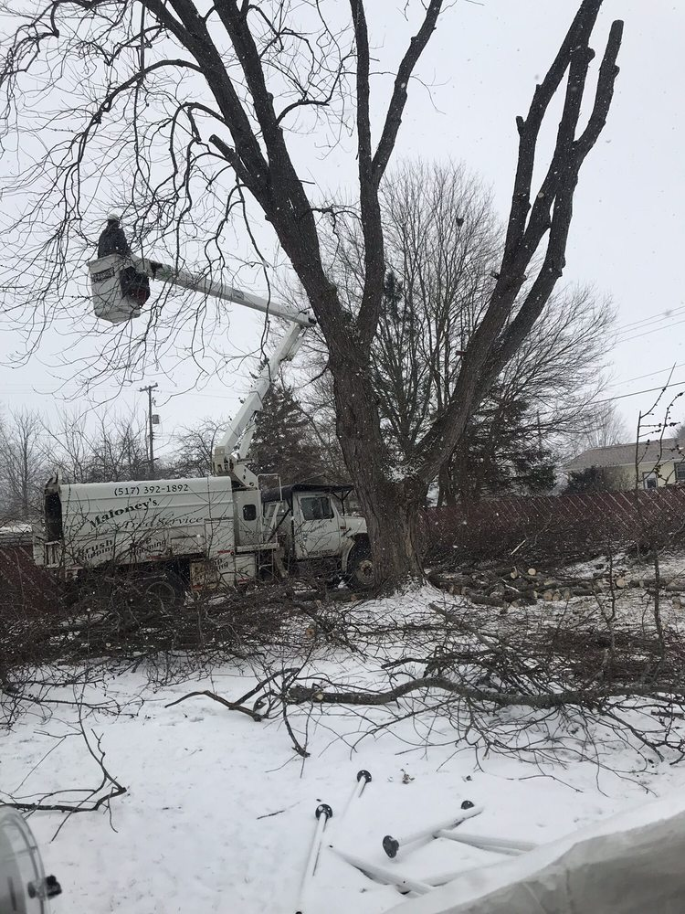 Maloney's Tree Service: 4087 Page Ave, Michigan Center, MI