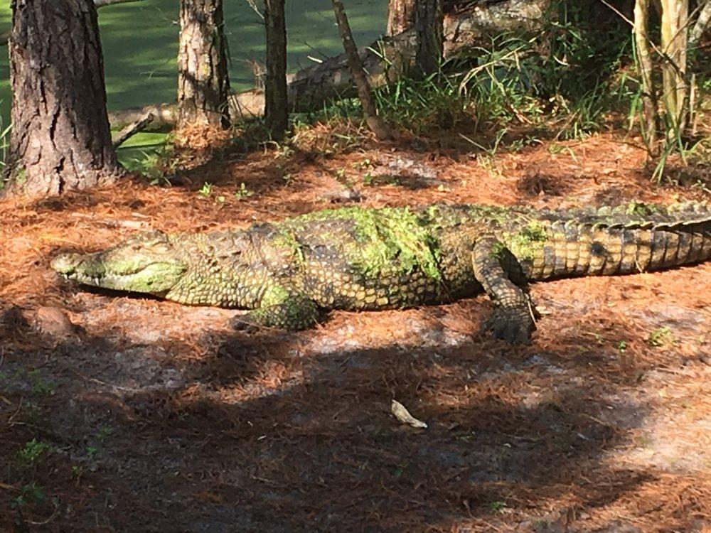 Smooth Waters Wildlife Park: 4500 Reed St, De Leon Springs, FL
