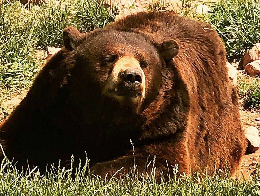 Social Spots from Bear Country USA