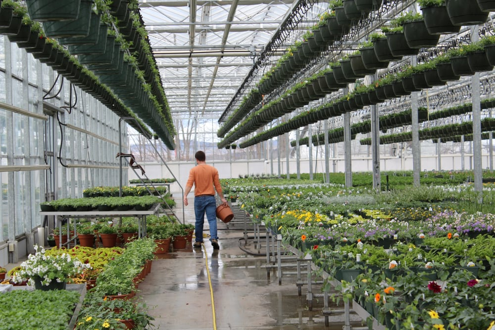Ledgeview Greenhouses: 275 Clough Hill Rd, Loudon, NH