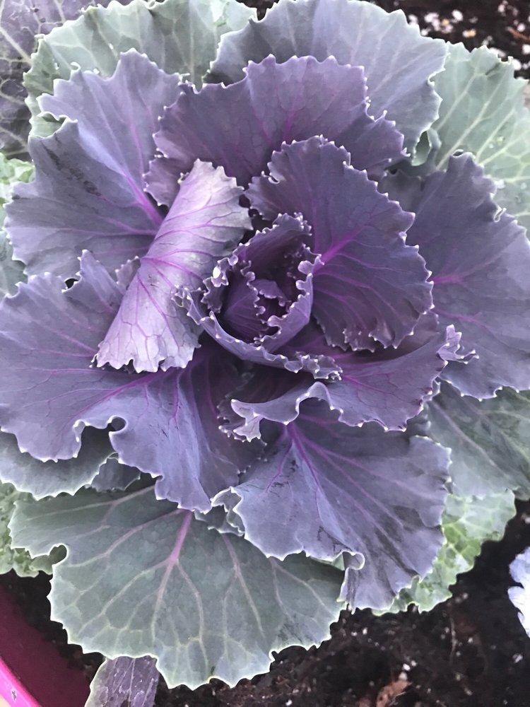 Farmer Browns Marketplace: 4280 Rte 434, Apalachin, NY