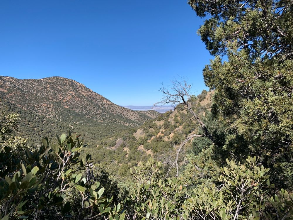 Mount Wrightson Picnic Area: Coronado National Forest, Madera Canyon, AZ