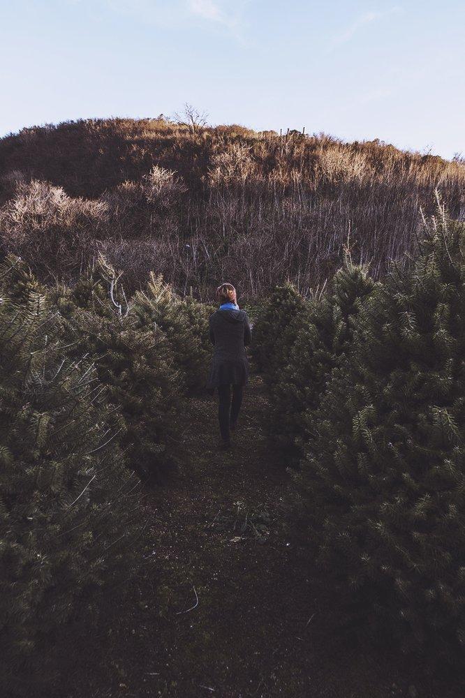 Photos for 4-C's Christmas Tree Farm - Yelp
