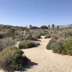 1000 Palms California Map.Coachella Valley Preserve 237 Photos 67 Reviews Hiking 29200