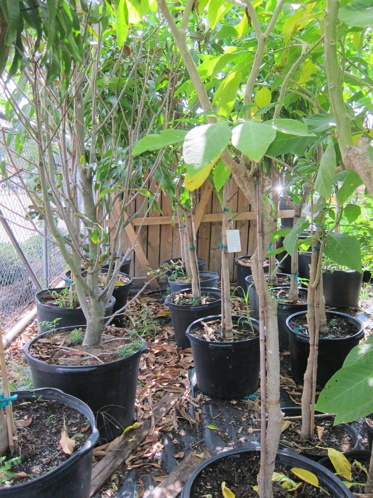 Photo Of Jrn Nursery 2 Houston Tx United States Tons Fruit