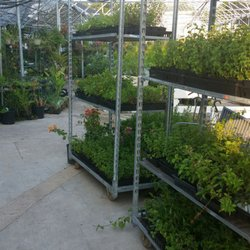 Photo Of Mikes Nursery Garden Center Fort Worth Tx United States