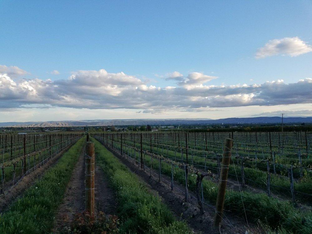 Two Mountain Winery: 2151 Cheyne Rd, Zillah, WA
