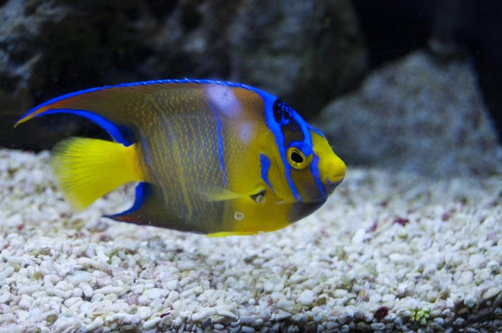 caesar s tropical fish factory inc 40 billeder 69 ForCaesars Tropical Fish